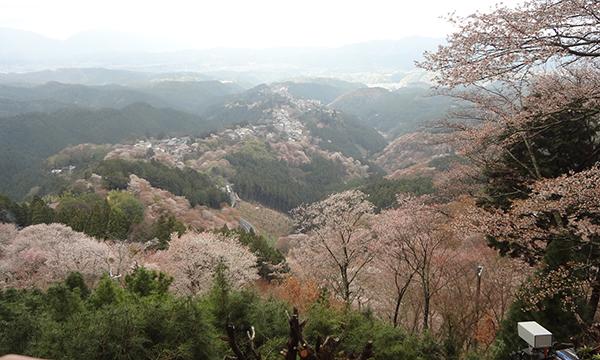 蜻蛉の滝から吉野山縦走