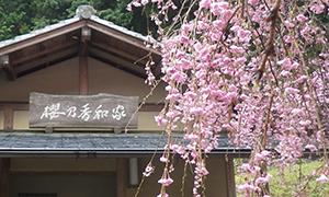 桜の香和家