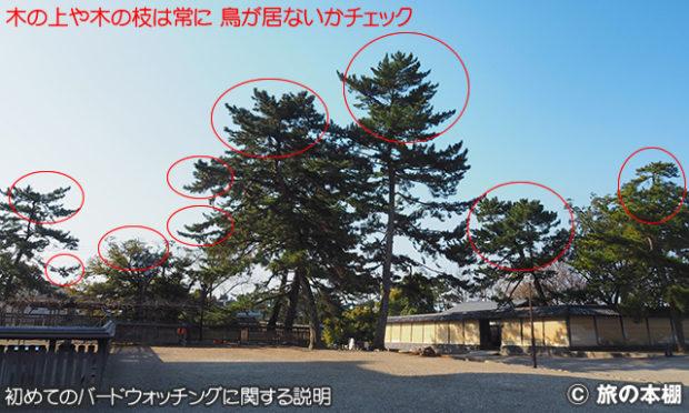 野鳥の見つけ方 その1 木の上を見る