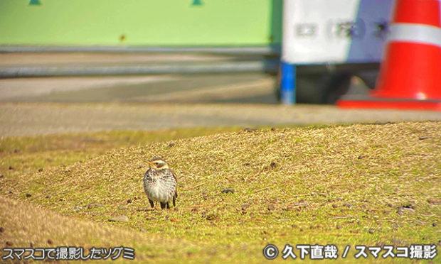 野鳥の見つけ方 その3 地面を移動する鳥をみつける