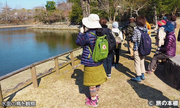 野鳥の見つけ方 その4 池や湖の水面を見る