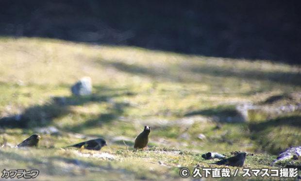 飛火野で野鳥観察