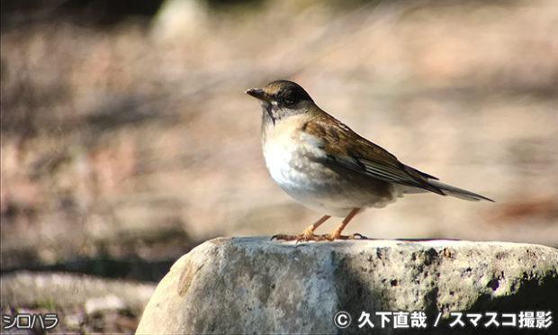 野鳥の見つけ方 その7 森林で木の枝や地面を見る