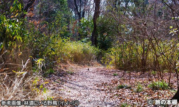 野鳥の見つけ方 その9 林道は歩き出す前に要チェック