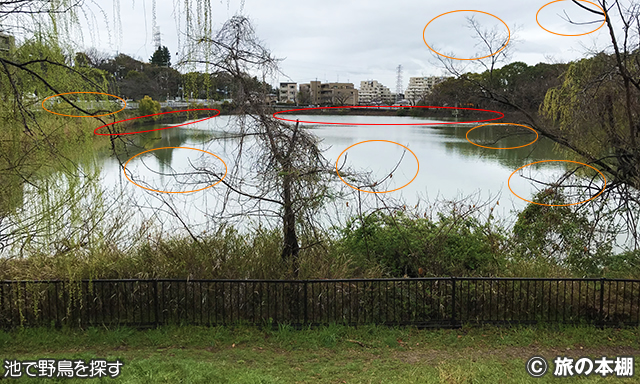 池で野鳥を探す