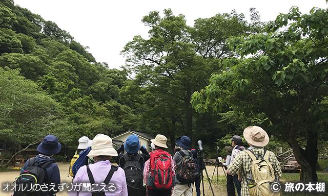公園の高木